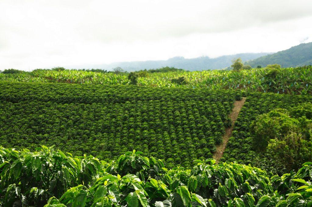Αυτή η εικόνα δεν έχει ιδιότητα alt. Το όνομα του αρχείου είναι Colombia-Coffee-Farm-1600x1066-1024x682.jpg